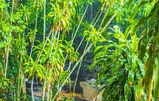 pluie de mousson goudron cascade nim jardin magique secret koh samui. photo