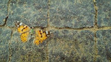 papillon orange mort sur le trottoir photo