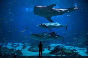 poissons dans l'aquarium photo