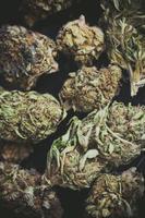 détail d'une fleur de bourgeons de marijuana photo