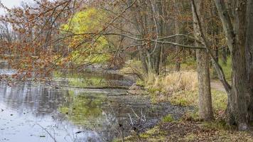 arbres printaniers colorés avec de jeunes feuilles au bord du lac photo
