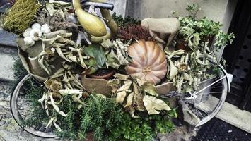 vélo avec composition florale et citrouilles photo