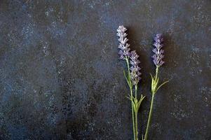 fleurs de lavande sur bois foncé photo