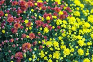 fleurs et feuilles de flore romantique vivantes colorées photo