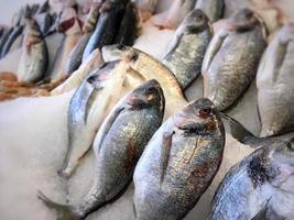 poissons de fruits de mer frais crus sur glace photo