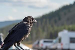 corbeau ou corbeau perché sur un véhicule dans le parc photo
