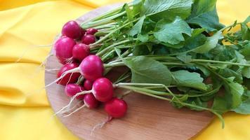 récolte de gros plan de radis. Les racines de radis juteuses mûres se trouvent photo