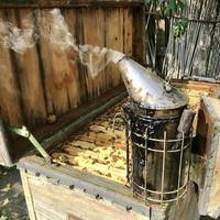 vieux grand-père apiculteur travaille sur son propre rucher rural photo