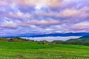 champs de riz en terrasse au village de pa bong piang chiang mai, thaïlande. photo