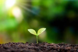 plantes ou arbres aux feuilles vertes poussant sur le sol et toile de fond de nature verte floue avec le concept de reboisement et de restauration des forêts avec cycle naturel. photo