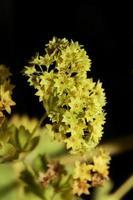 fleur fleur gros plan impressions de grande taille de haute qualité photo