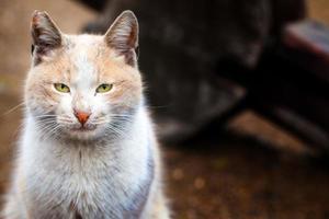 doux animal de compagnie chat photo