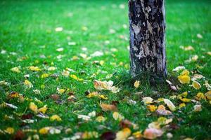 feuilles d'automne sèches dans la nature photo