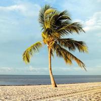 cocotier sur une plage de sable blanc. photo