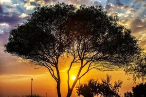 arbres dans la nature dans le parc photo
