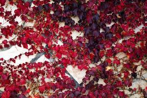 abstrait feuilles naturelles sur le mur photo