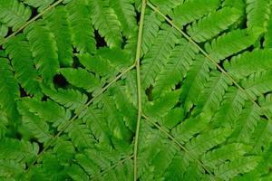 Gros plan d'une feuille de fougère verte photo