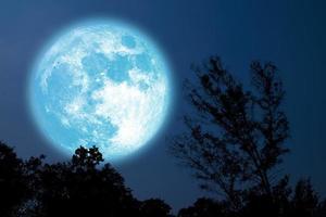 Arbre à pleine fleur de silhouette de lune bleue dans le champ sur le ciel nocturne photo
