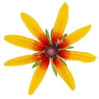 isolat de fleur jaune et coccinelle. macro photo