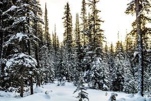 lac de chester. parc provincial peter lougheed photo