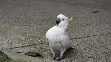 oiseau blanc sur sol en brique brune photo