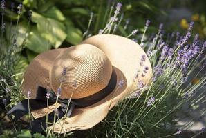 grand chapeau de paille dans les buissons de lavande photo