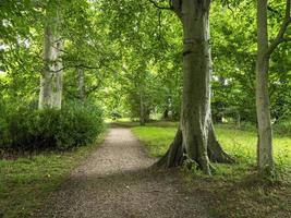 Chemin à travers bois avec feuillage d'été à Burton Agnes East Yorkshire photo
