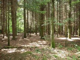 forêt d'arbres photo