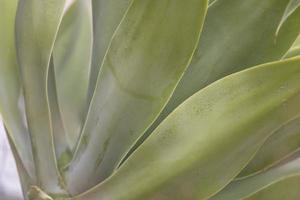 gros plan de feuilles de plantes succulentes photo