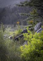 fleurs sauvages entre les rochers pendant les jours de pluie photo