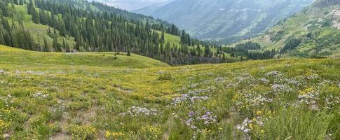 Prairie de fleurs sauvages près de la butte à crête au Colorado photo