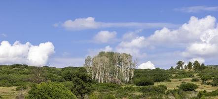 vue panoramique sur la tremblaie sur les montagnes rocheuses du colorado photo