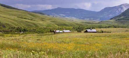 vue panoramique sur les granges dans la prairie de fleurs sauvages photo
