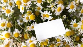 le beau bouquet de fleurs naturelles photo