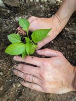 la plantation d'un jeune jardin commence photo