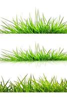 herbe verte isolée sur fond blanc photo