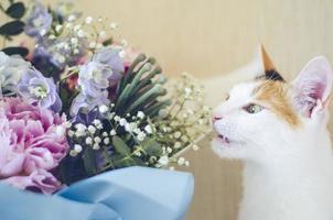 chat domestique tricolore mord des fleurs photo