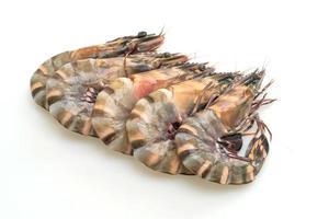 Crevettes tigrées fraîches ou crevettes isolées sur fond blanc photo