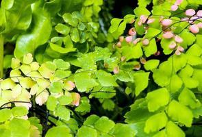 fraîcheur petites feuilles de fougère avec mousse et algues dans le jardin tropical photo