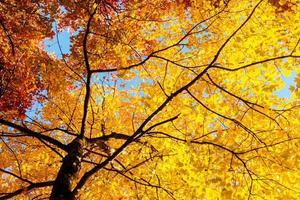 feuilles et branches jaunes en automne photo