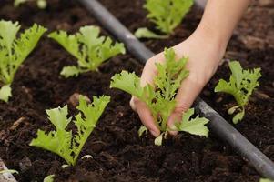 main obtenir des légumes biologiques photo