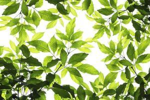 beau motif de feuille verte sur le fond de la surface photo