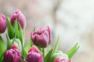 fleurs roses de printemps floue toile de fond abstraite photo