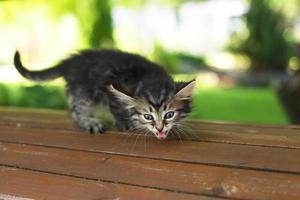 un chaton errant dans le parc sur un banc, en été photo