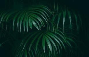fond de jungle tropicale feuille verte photo