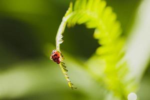 bug sur les feuilles avec espace de copie photo
