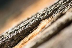 rétro-éclairage de peau d'arbre 02 photo
