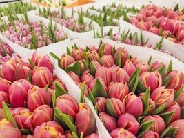 vente de tulipes dans le magasin. Couleurs différentes. photo
