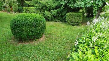 arbustes d'ornement. espace vert en forme de boule. parterres de fleurs photo