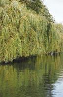 came de rivière à cambridge photo